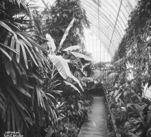 Palm House in 1904