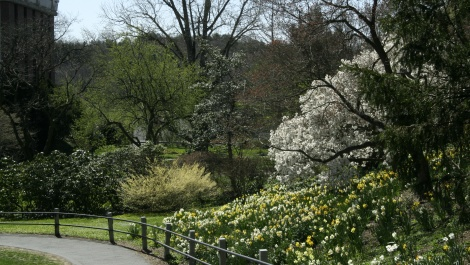 View of the Wilson Bulb Bank and spring flowering shrubs