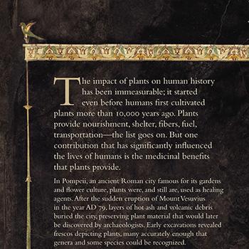 Pompeii information panel