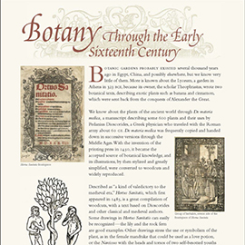 Botany Through the 16th Century information panel