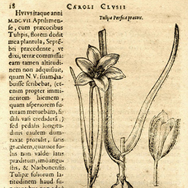The Tulip panel