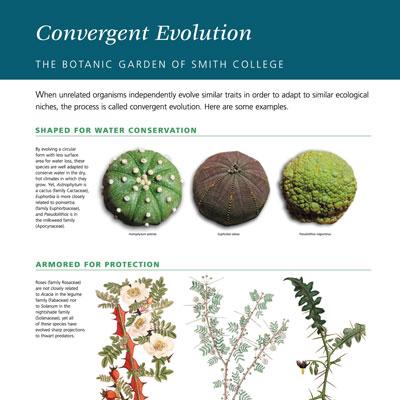 Convergent Evolution information panel