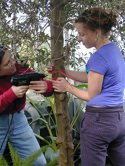 student and instructor drilling tree in greenhouse