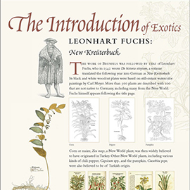 The Introduction of Exotics information panel
