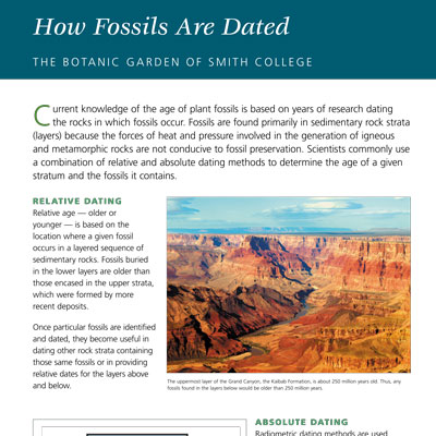 Fossil Dating information panel