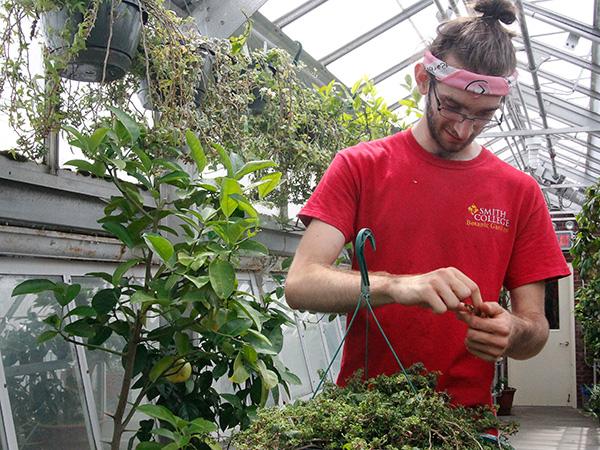 Summer intern Gil Wermeling taking ivy cuttings