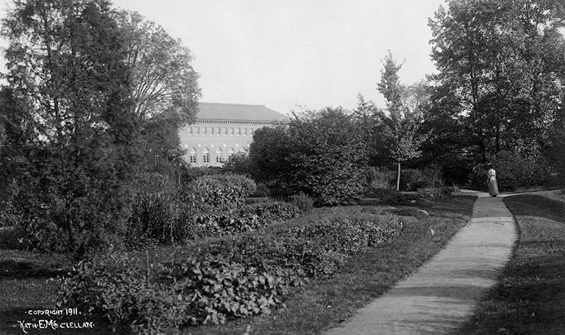 Herbacous garden with ginkgo and Neilson Library in the background 1911