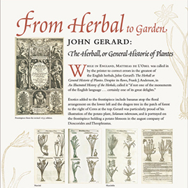 From Herbal to Garden, John Gerard panel