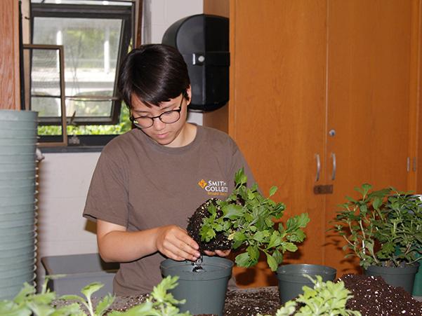 Summer intern Lucy Hall potting mums