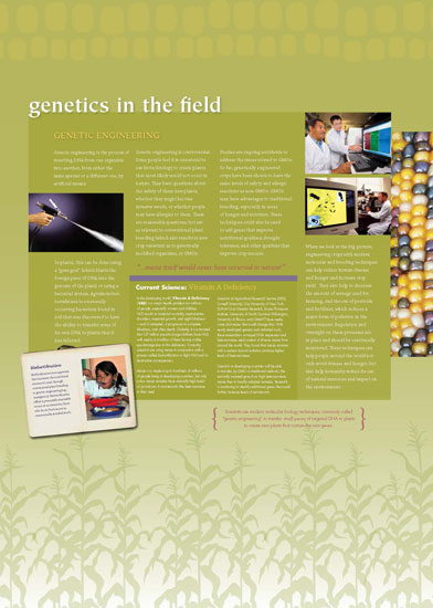 Maize - Genetics in the Field Panel