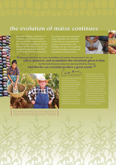 Maize - The Evolution of Maize Continues Panel