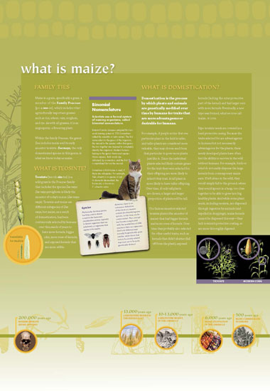 Maize - What is Maize? Panel