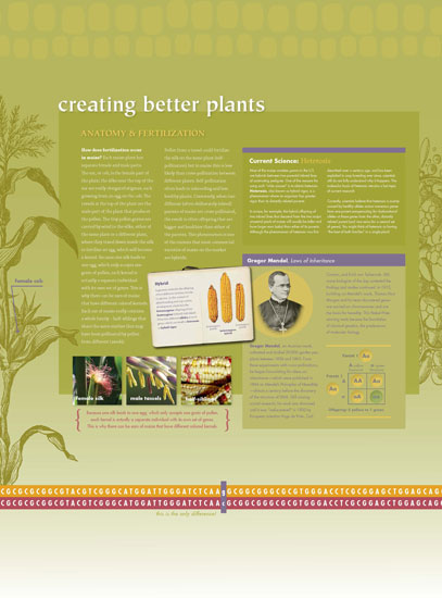 Maize - Creating Better Plants Panel
