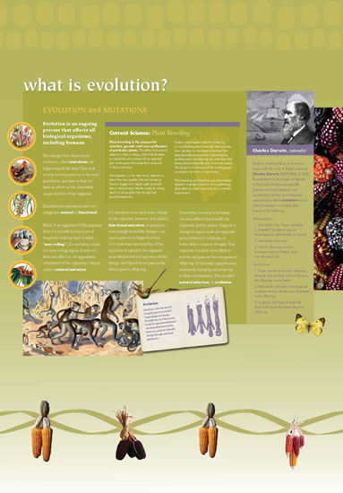 Maize - What is Evolution Panel