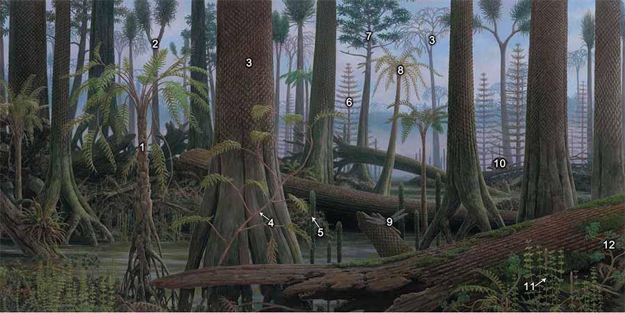 Mural 5 Carboniferous Coal Swamp Forests