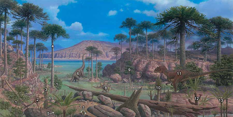Mural 6 Age of Gymnosperms