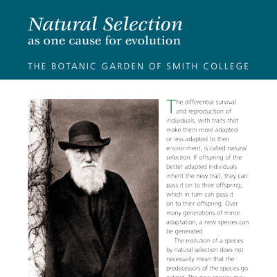 Natural Selection information panel