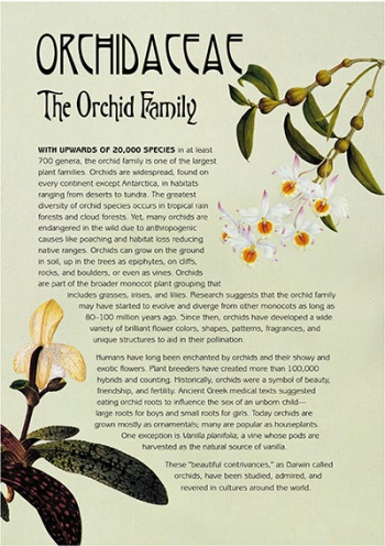 Orchid Family Information Panel