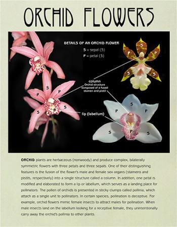 Orchid flower details panel