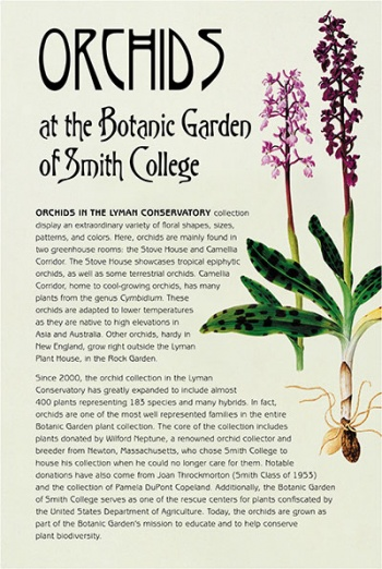Orchids at the Botanic Garden of Smith College