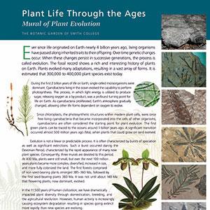 Plant evolution mural intro panel