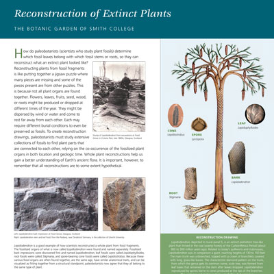 Plant Reconstruction information panel