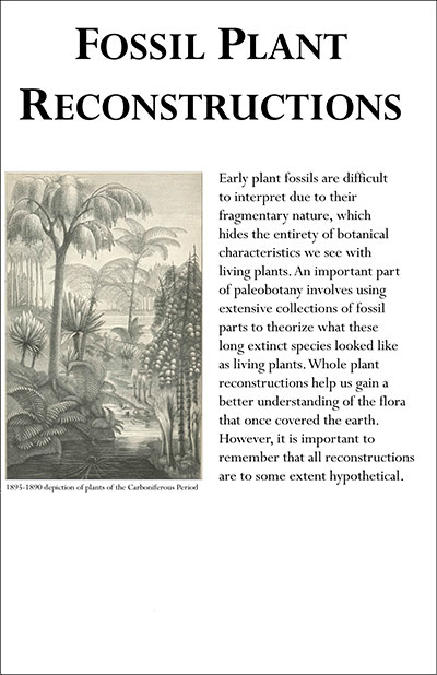 Fossil plant reconstruction information