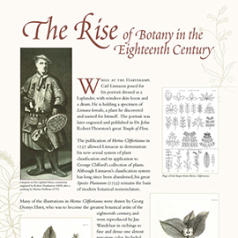 The Rise of Botany in the 18th Century Information panel