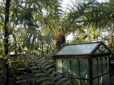 An assortment of fern branches in the greenhouse