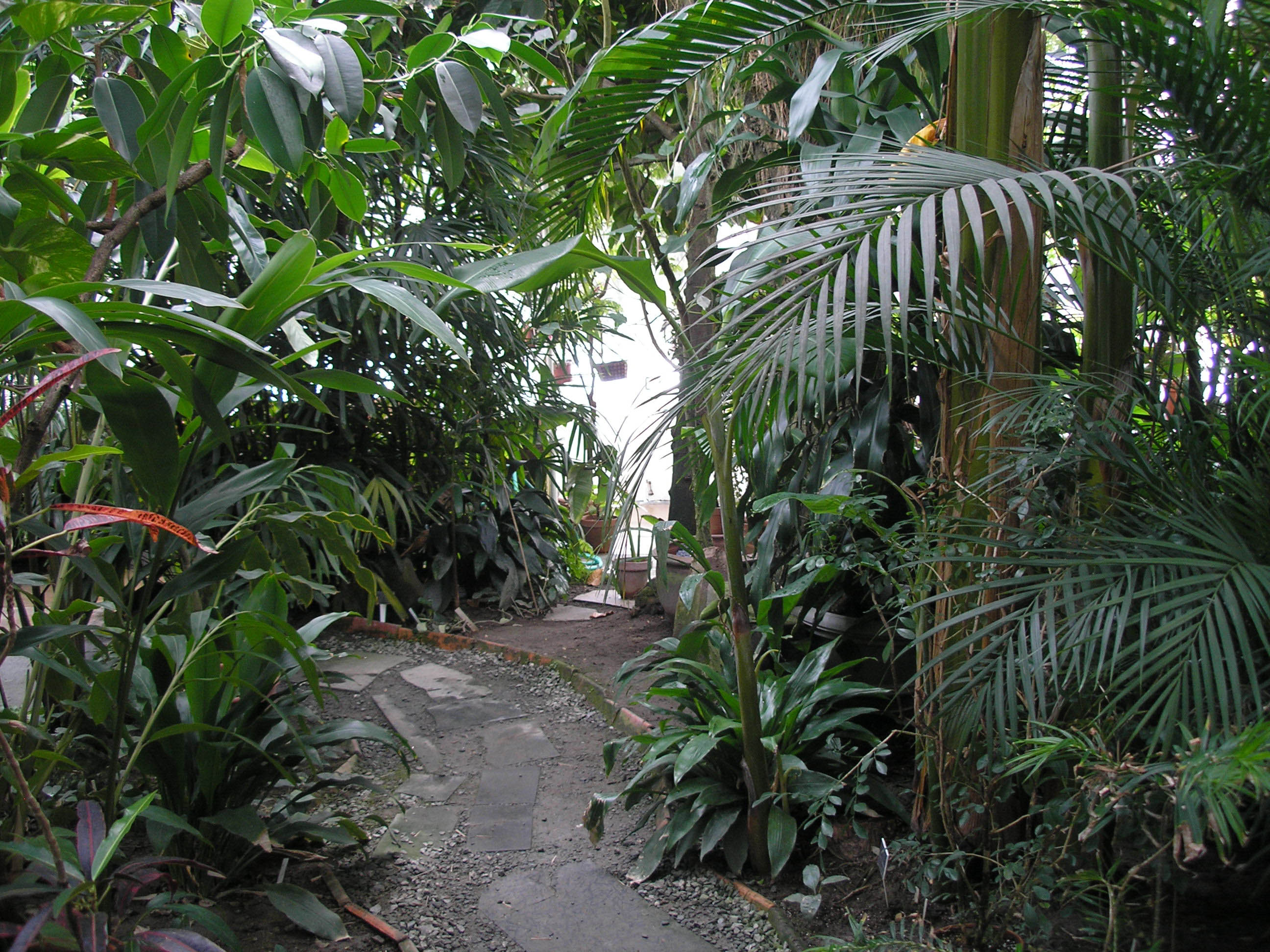 Curving path in the Palm House
