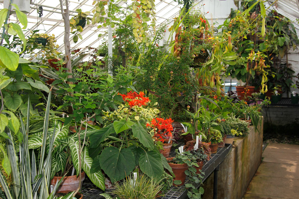 warm temperate greenhouse