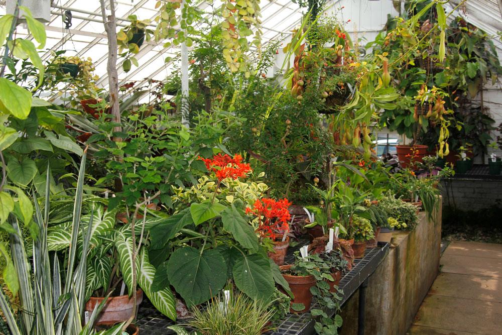 warm temperate greenhouse