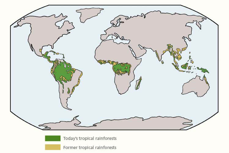 Map of change in tropical rainforest cover over time