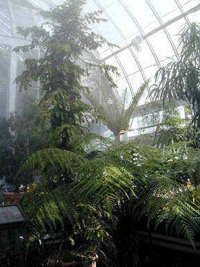 Fogging system in the greenhouse
