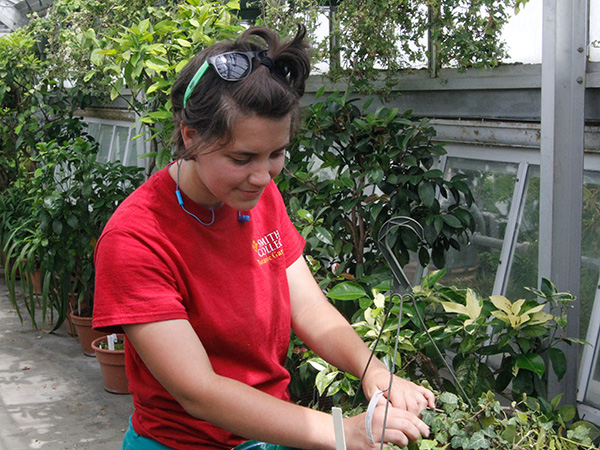 Summer intern Taz Mueller taking ivy cuttings
