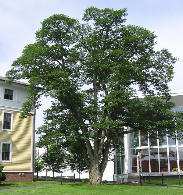 tree standing in front of the campus center