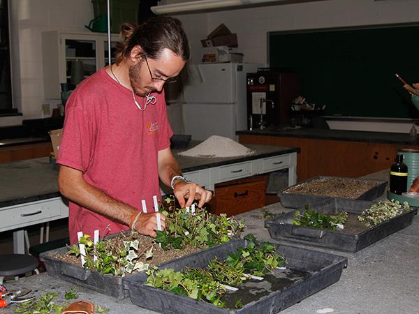 Summer intern Tyler Barron rooting ivy cuttings