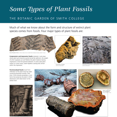 Types of Fossils information panel