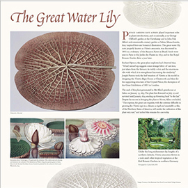 The Great Water Lily information panel