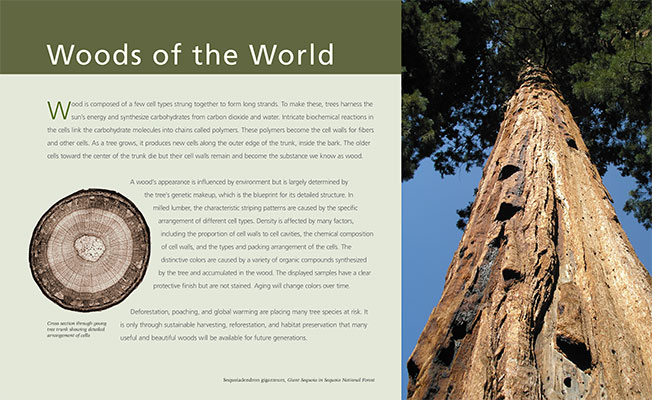 Woods of the World Introduction Panel