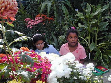 Two young girls looking at chrysanthemums