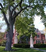 College Hall elm tree
