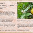 Lemon image and informational text