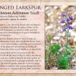 Winged Larkspur image and informational text