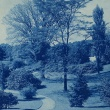 view of trees on campus, old cyanotype