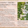 Calamint Savory image and informational text