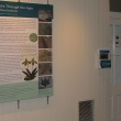 gallery introduction panel and geological timeline