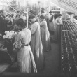 horticulture students in greenhouse in 1904