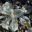 Iris x Frank Elder