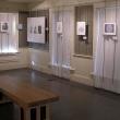 View of exhibit Experiencing Plants Through Art